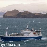 Huginn VE 55 kom  með 1300 tonn til Eyja í morgun