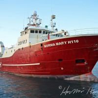 Norma Mary H110