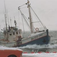 Lómur SH 177